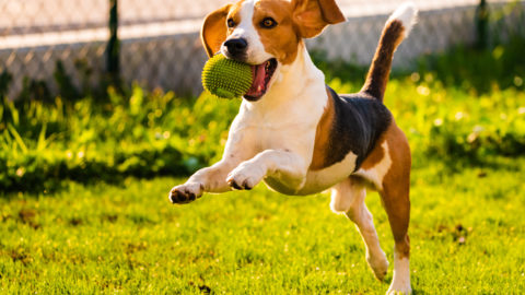 On The Spot Pet Care