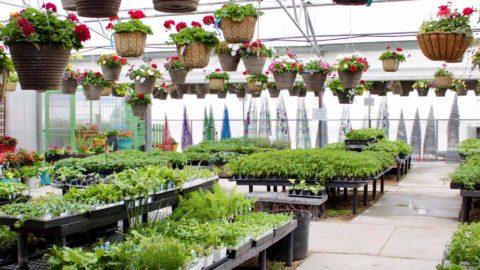 Olson's Garden Shoppe